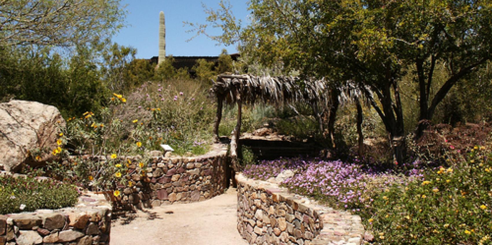 The Desert Museumu0027s Gardens Showcase A Vibrant Ecosystem And Represent A  Variety Of Biotic Communities Found Within The Sonoran Desert Region, ...