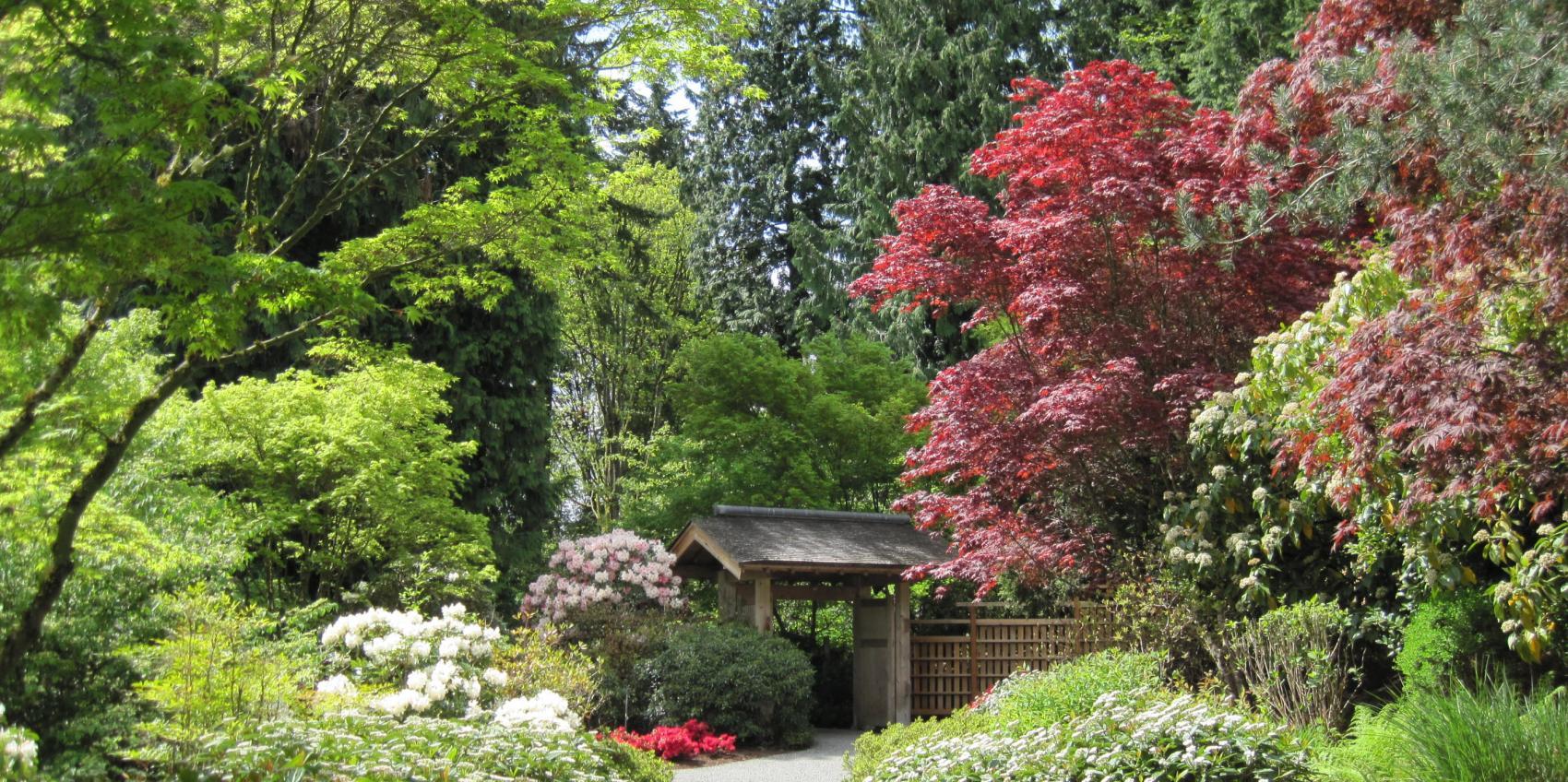 Bellevue botanical garden american public gardens association for Bellevue botanical garden lights