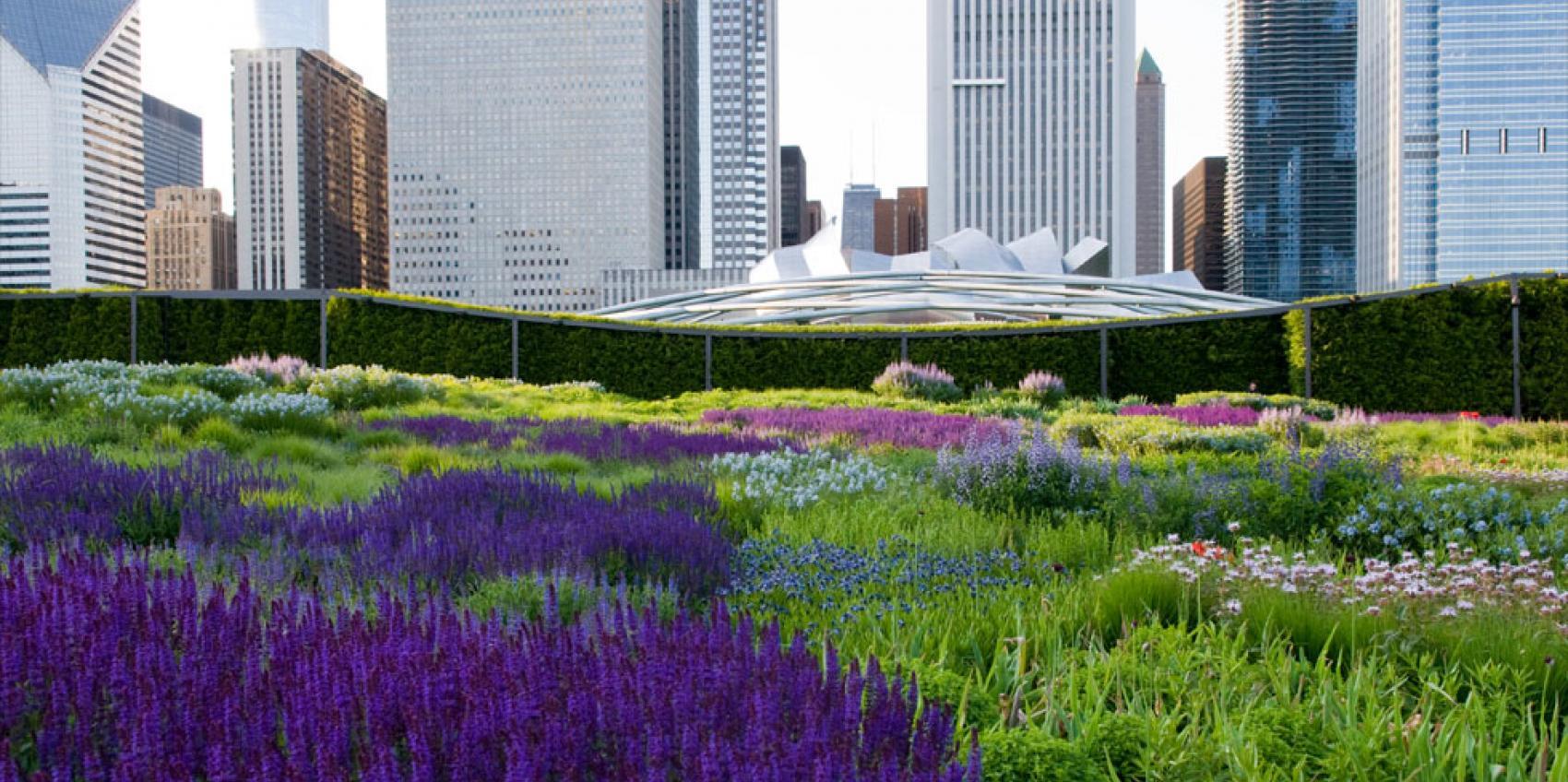 Lurie Garden American Public Gardens Association