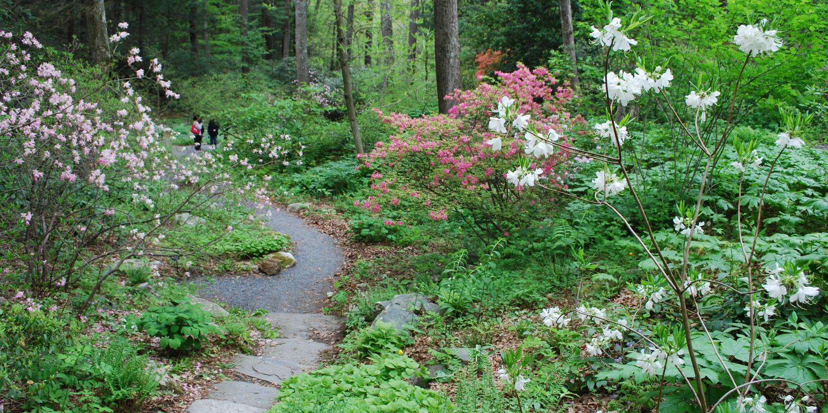 New england wild flower society american public gardens for Garden trees england