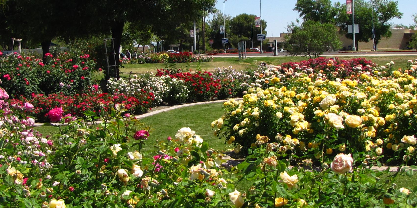 Rose garden at mesa community college american public for American garden association