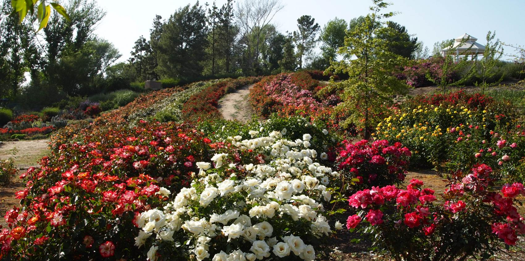Lovely heritage rose garden images landscaping ideas for for Garden information sites