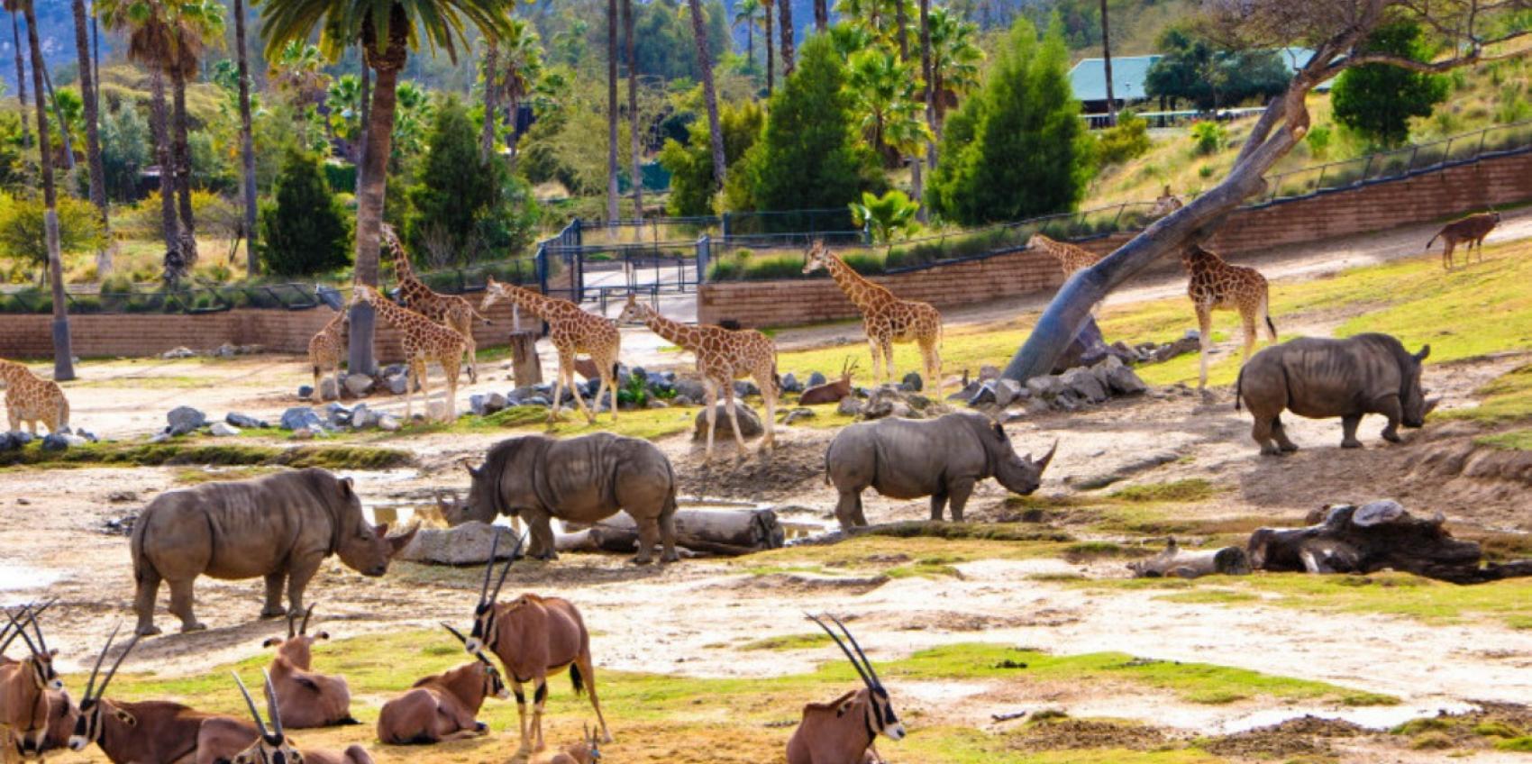San Diego Zoo Safari Park American Public Gardens Association