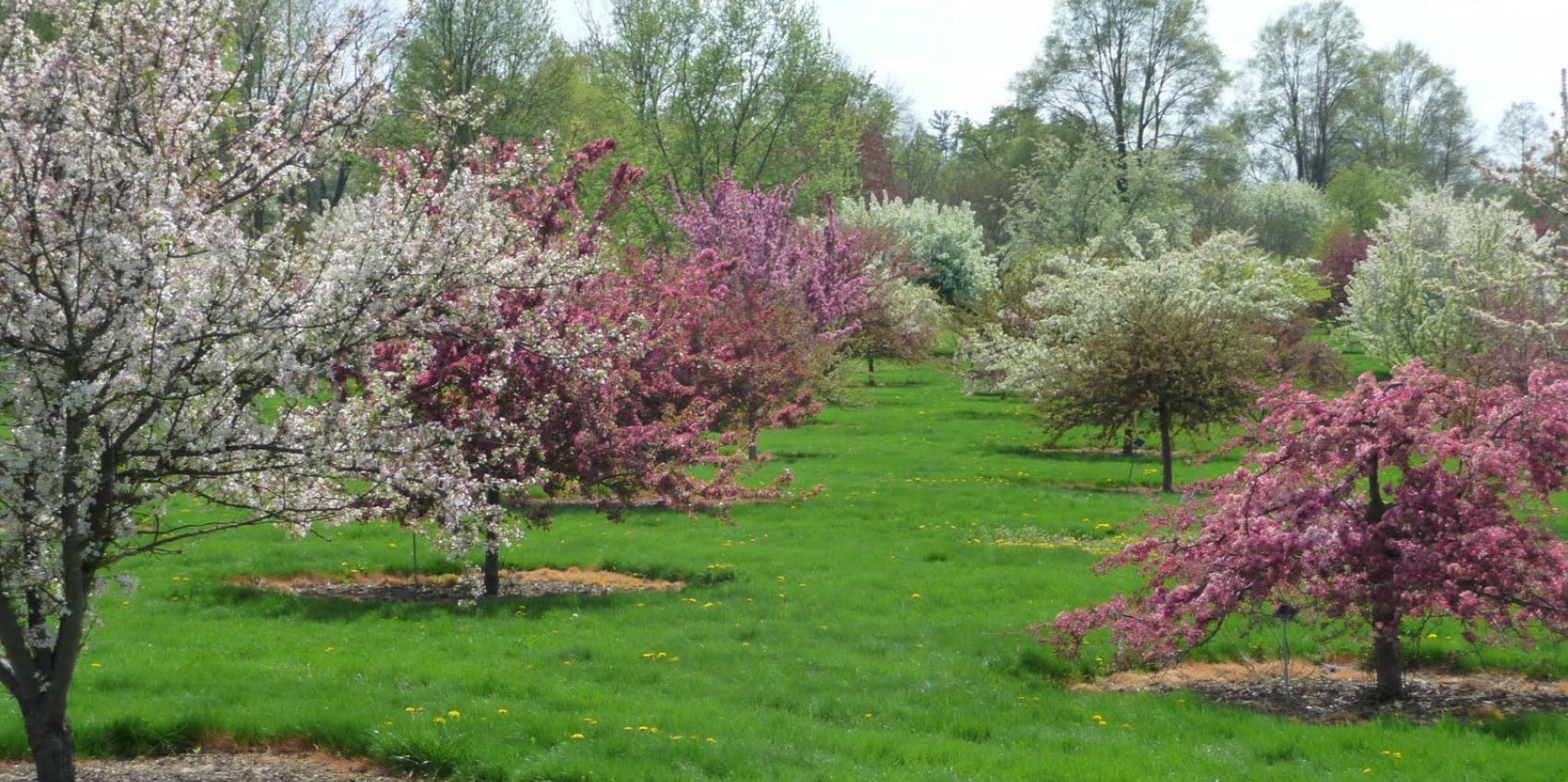 Secrest Arboretum Oardc American Public Gardens Association