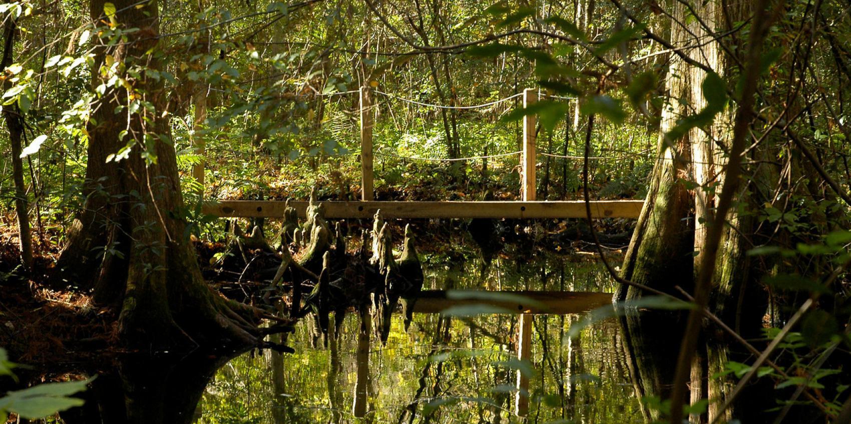 Jacksonville arboretum gardens american public gardens - Jacksonville arboretum and gardens ...