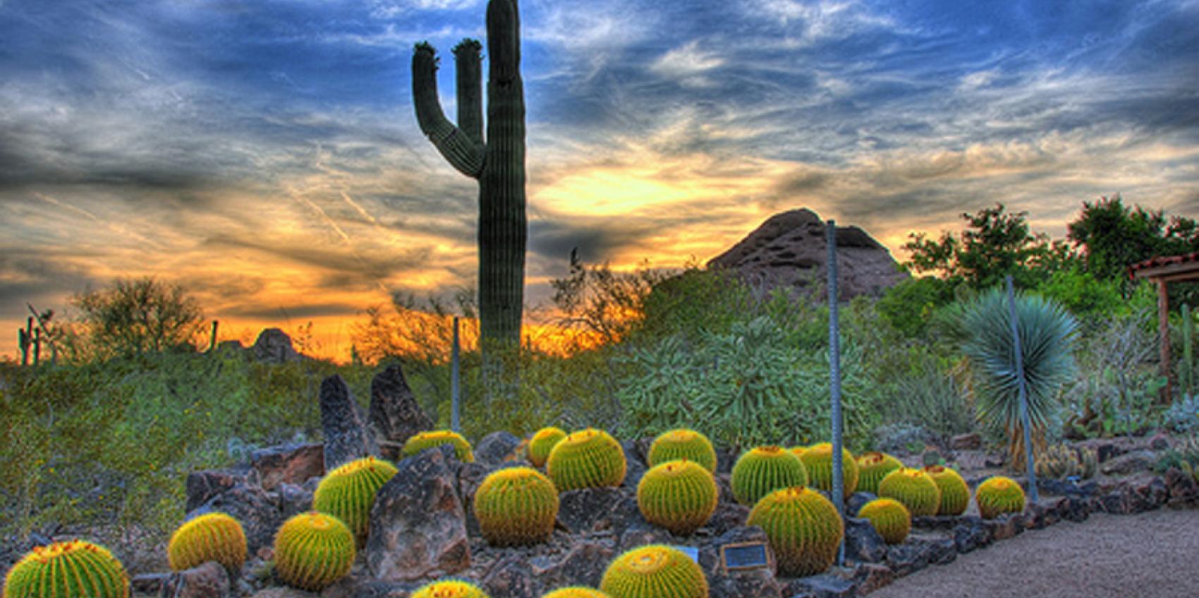 desert botanical garden - Phoenix Desert Botanical Garden
