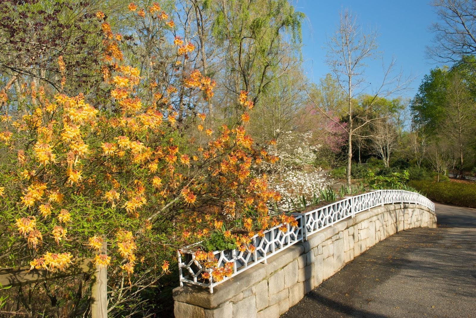 State Botanical Garden of Georgia Celebrates 50 Years | American ...