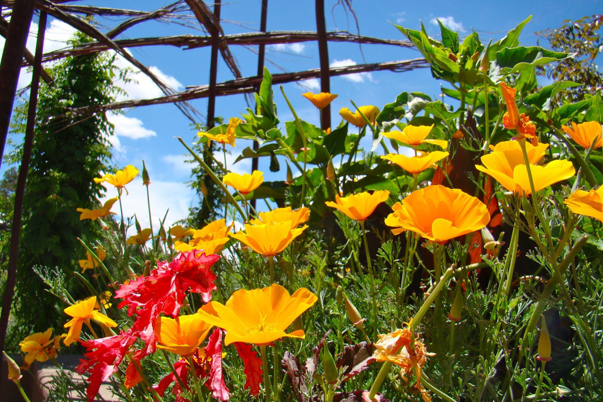 Charmant Santa Fe Botanical Garden Awarded Prestigious IMLS Grant