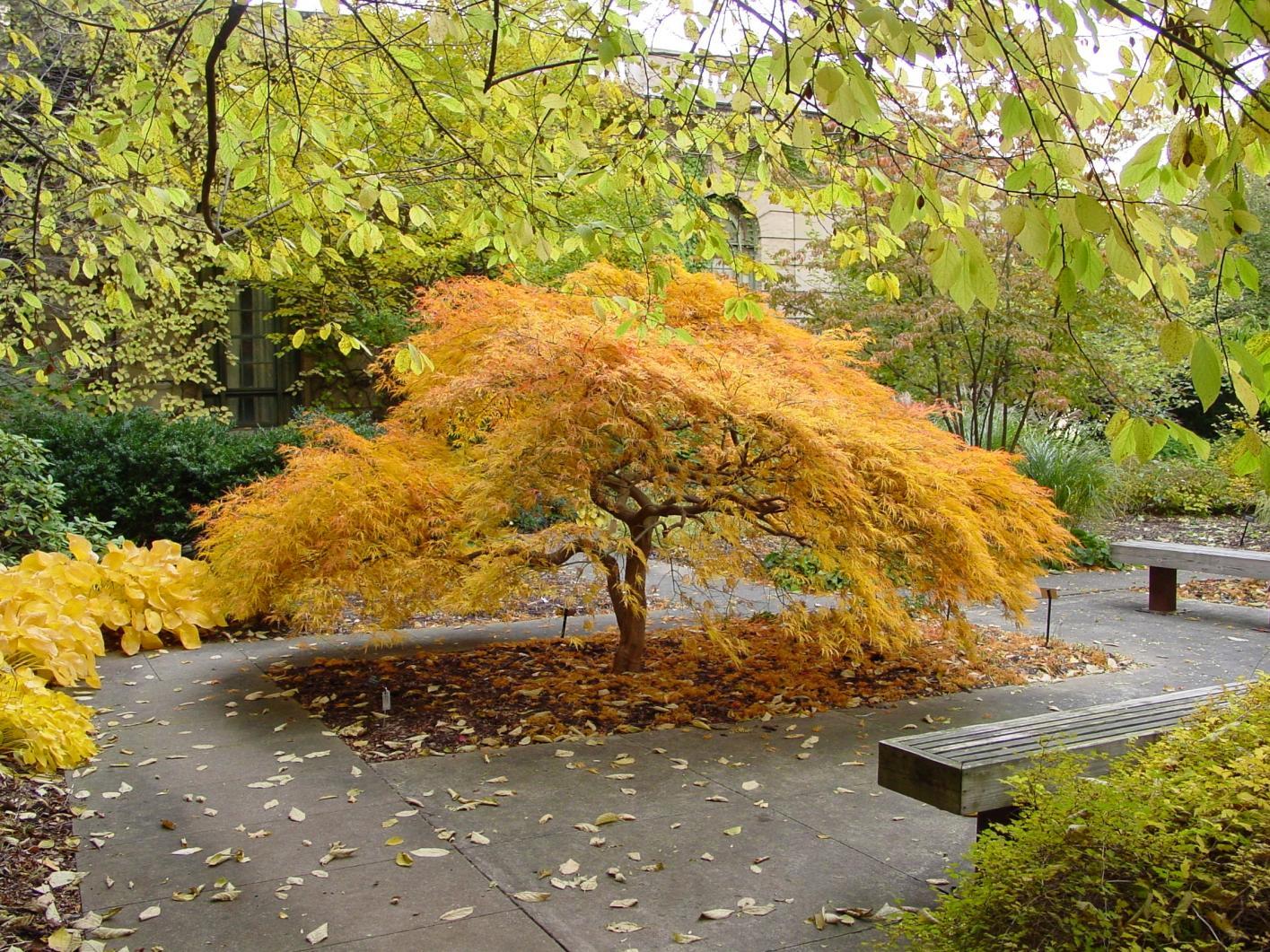 Acer Multisite | American Public Gardens Association