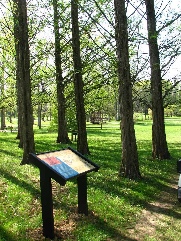 Metasequoia Glyptostroboides American Public Gardens Association