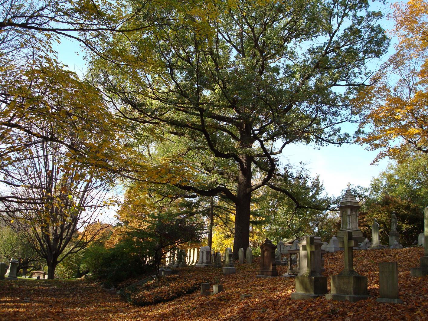 Quercus Multisite American Public Gardens Association