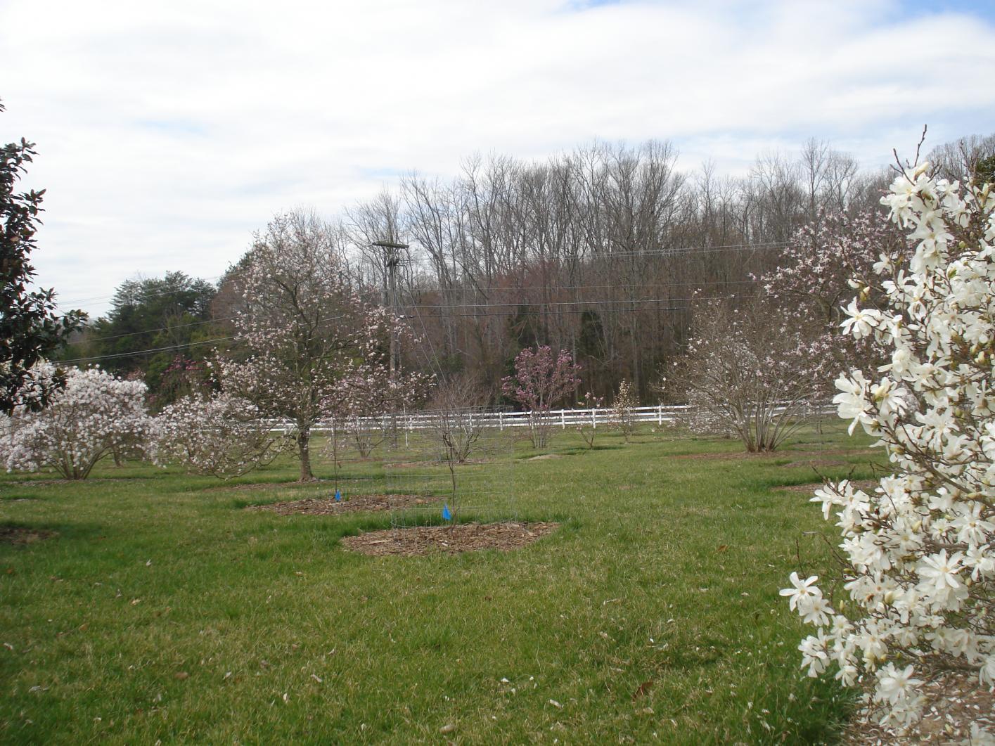 Magnolia Multisite American Public Gardens Association
