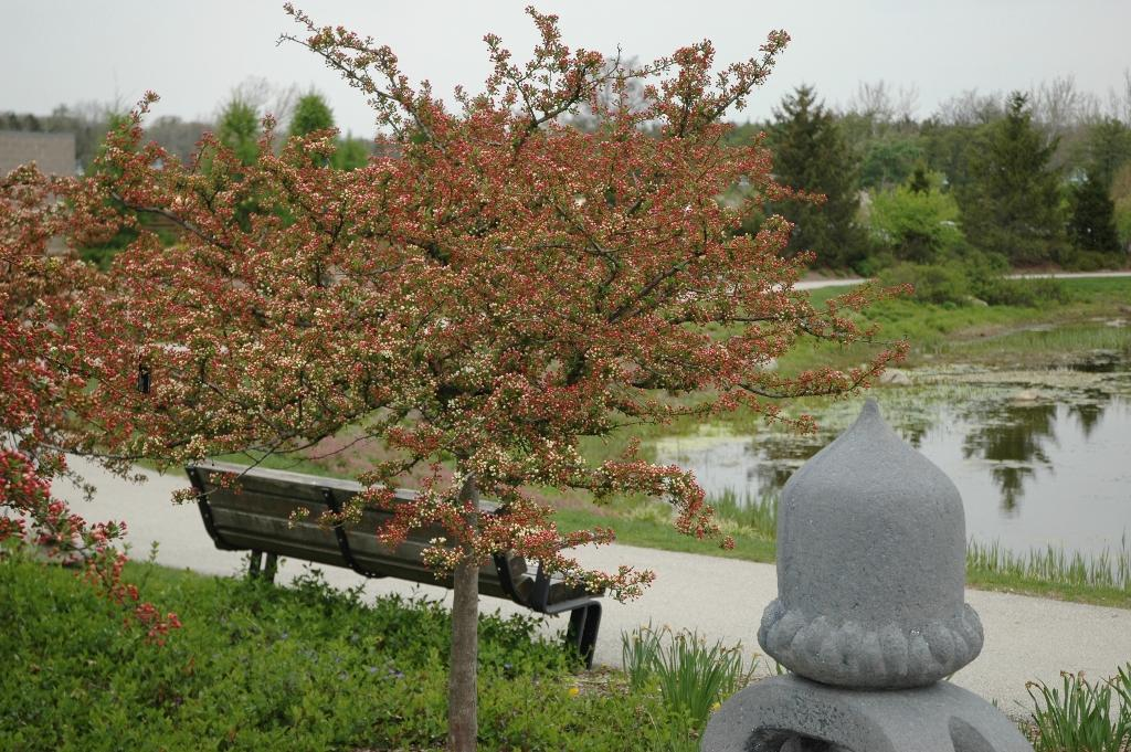 Malus American Public Gardens Association