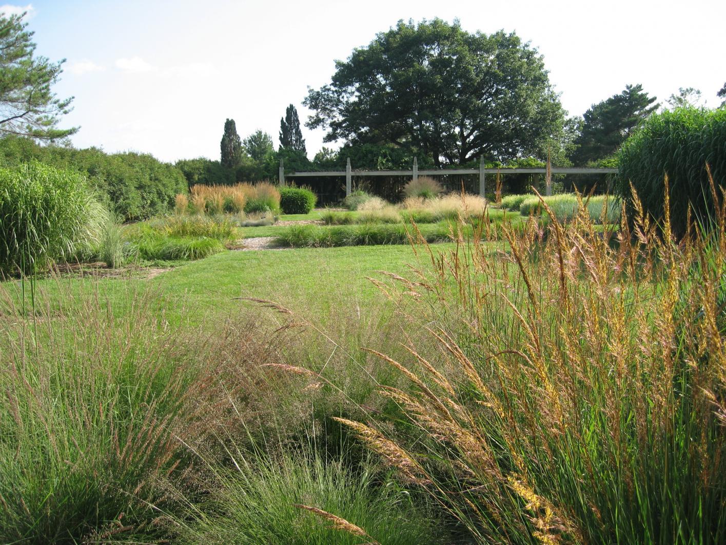 Ornamental Grasses American Public Gardens Association